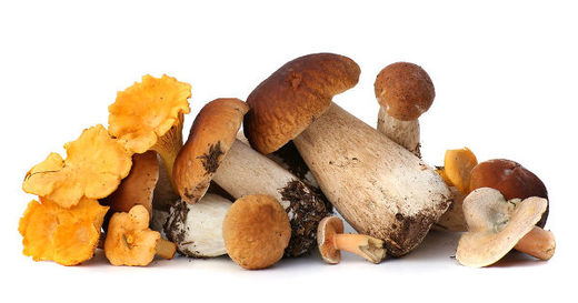 Food as medicine: Mushrooms for longevity