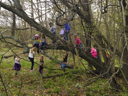 Kids are missing out on climbing trees