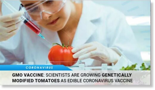 "Ice Age Farmer Report: Edible vaccine""? PHARMING – Food that changes you"